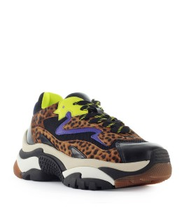 SNEAKER ADDICT LEOPARDO MULTICOLOR ASH